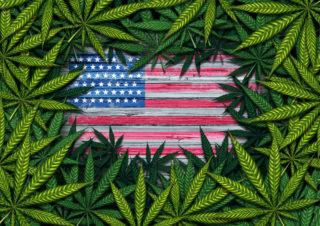 marijuana federal employment cannabis