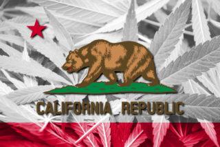 california cannabis marijuana