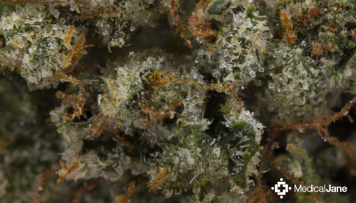 The 53 Best Weed Strains – Cannabistical: of or concerning cannabis
