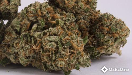 hippy crack weed strain