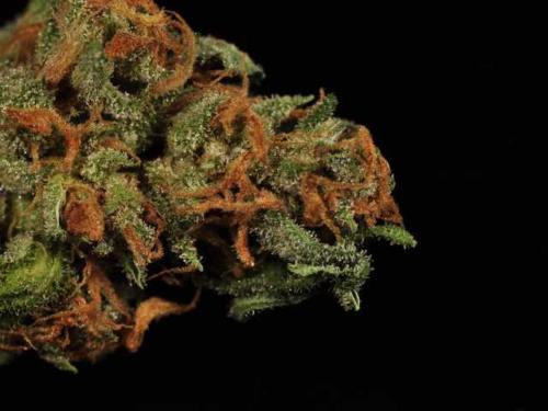 The 53 Best Weed Strains – Cannabistical: of or concerning