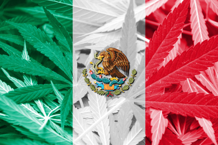 mexico marijuana cannabis