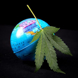 cannabis international trade war china hemp