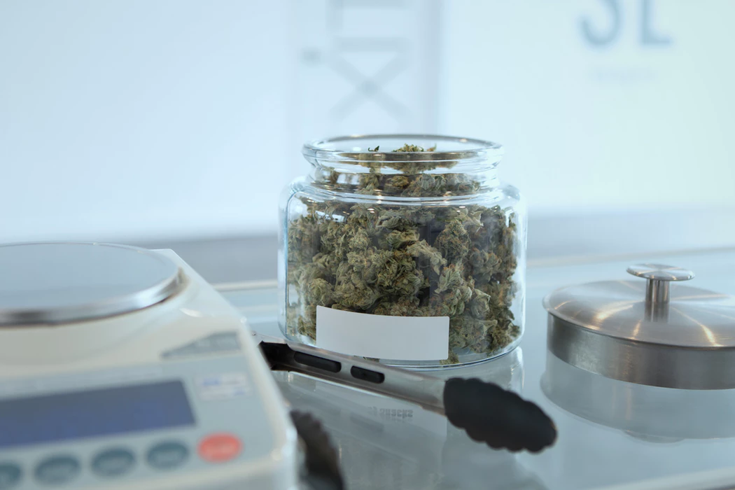 Cannabis plant matter in a glass jar