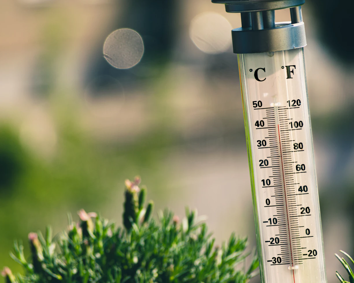 Thermometer next to a plant