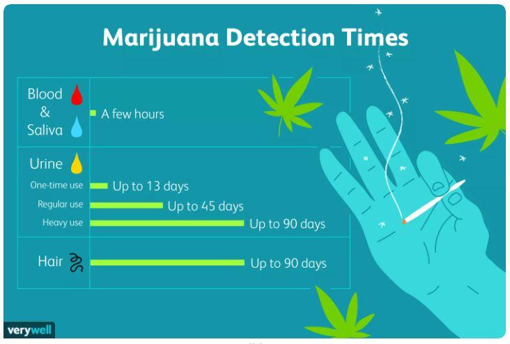 Cannabis duration in body