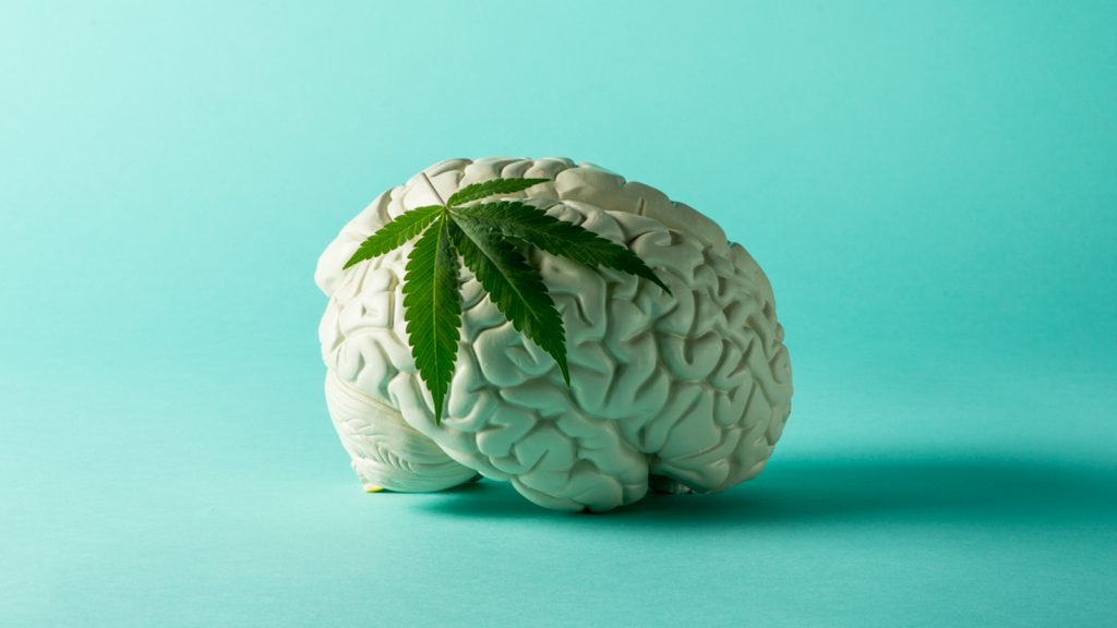 THC and your body and brain