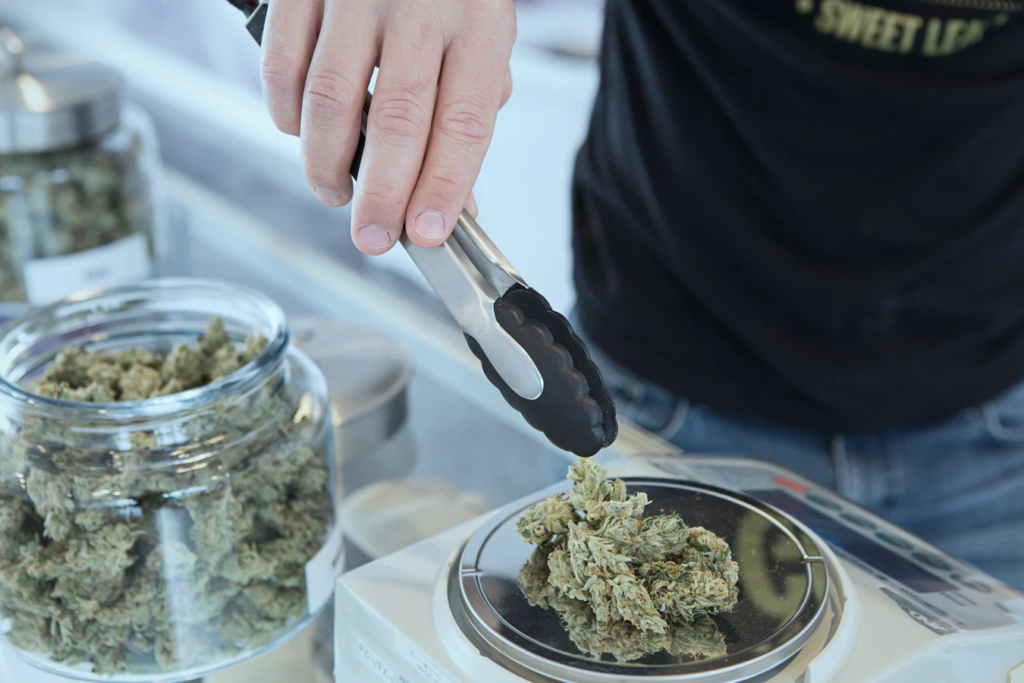 cannabis being weighed for cannamilk